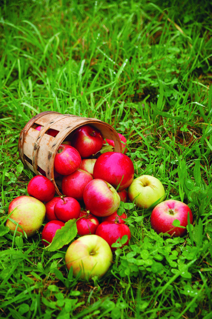 Tips for Growing Apple Trees
