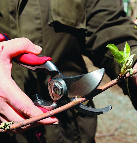 Regular pruning is essential