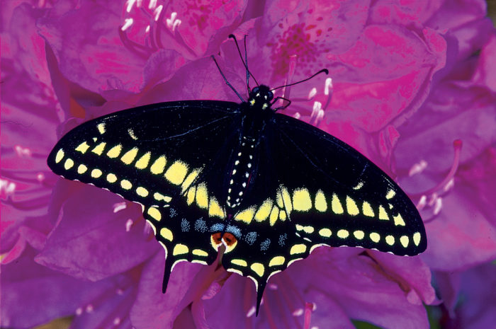 Plants for the Butterfly Garden