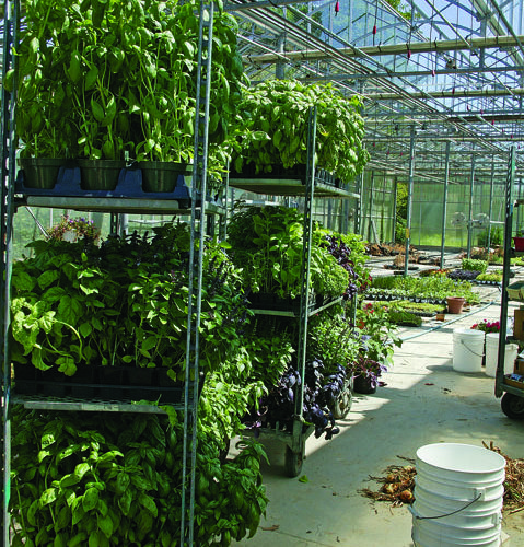 shipping a plant to market