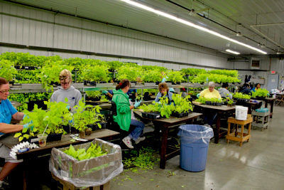 propogating plant for market