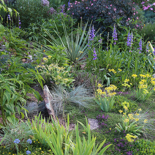 Fine Gardening Issue 183 Finegardening