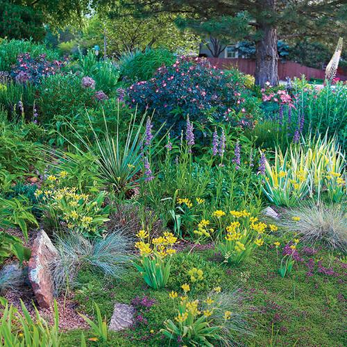water-wise garden design