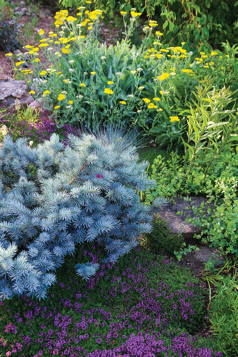 thickly planted garden bed