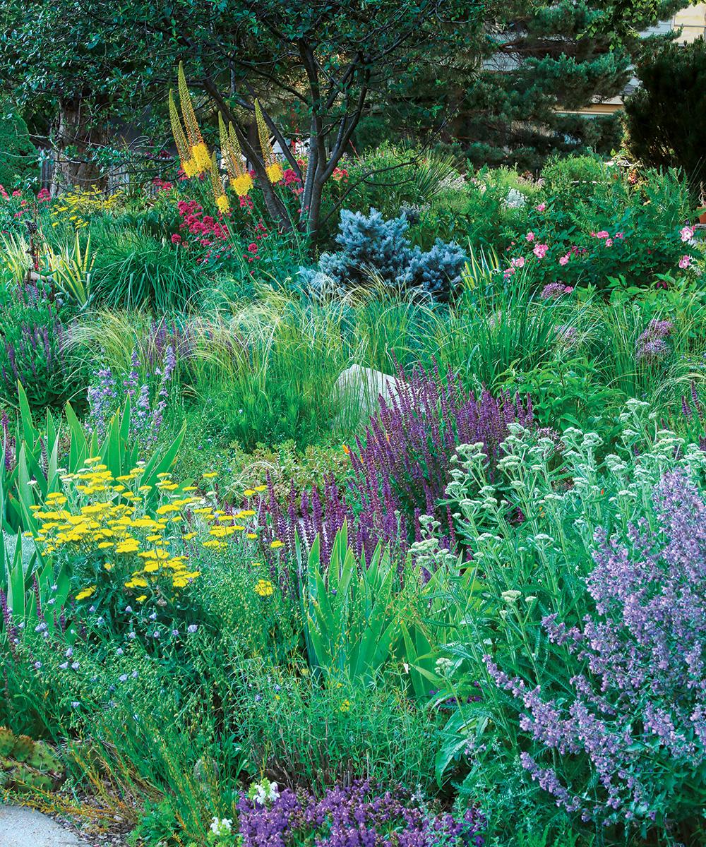 varied plant palette