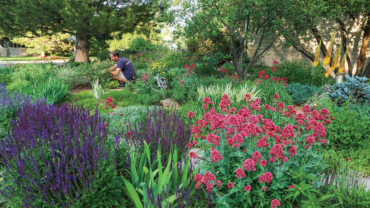 man tending a water-wise garden