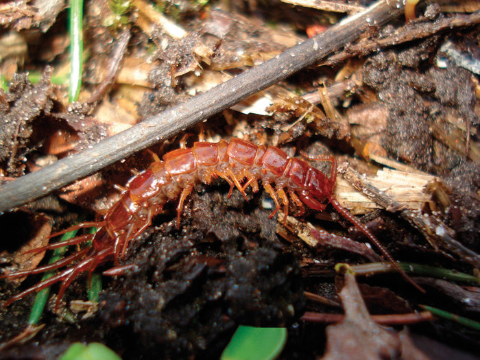 Critters in Your Compost? - FineGardening