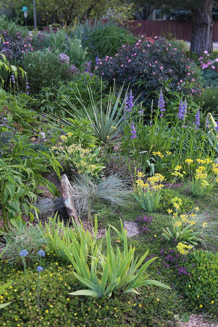 In U201cA Water Wise Garden That Worksu201d (Fine Gardening #183), Author Patrick  Quadrel Begins, U201cIn 2005, I Killed My Front Lawn.u201d What He Grew Instead Of  The ...