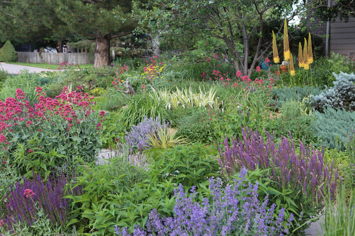 Preview: A Water Wise Garden That Wows