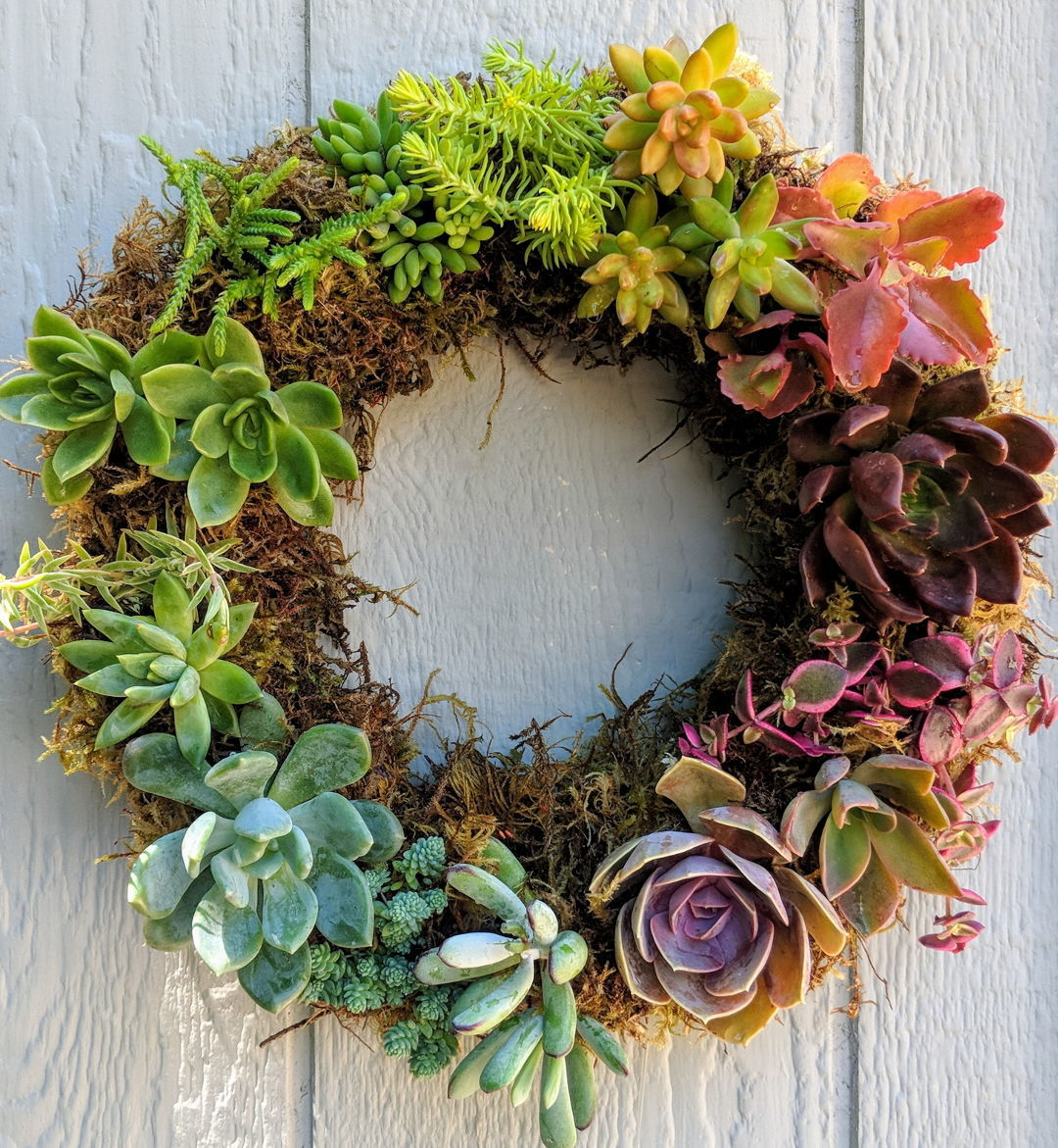 Making Succulent Wreaths Finegardening