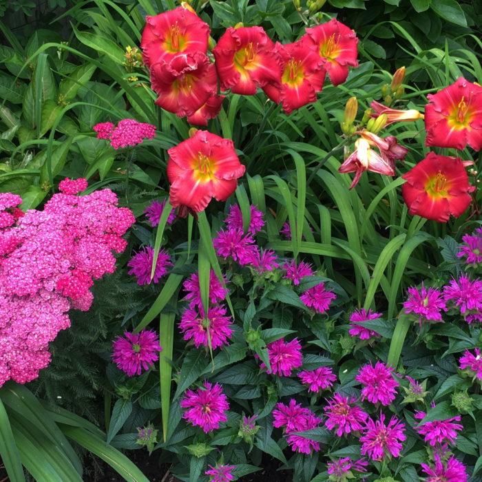 Envisioning a Dream Garden - FineGardening