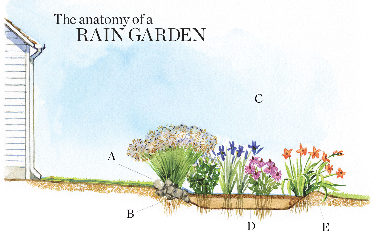 How to Design a Rain Garden - FineGardening Rain Garden Drawing Design Ideas on raised bed gardening design ideas, rain water garden ideas, greenhouse design ideas, landscape design ideas, rain garden construction, rain barrel design ideas, rain garden plans, downtown design ideas, rain garden installation, rain garden architecture, rain garden design diagrams, flower box design ideas, orchard design ideas, rain garden layout, rain gardening, permaculture design ideas, rain garden design templates, rain garden plants, rain garden design software, root cellar design ideas,