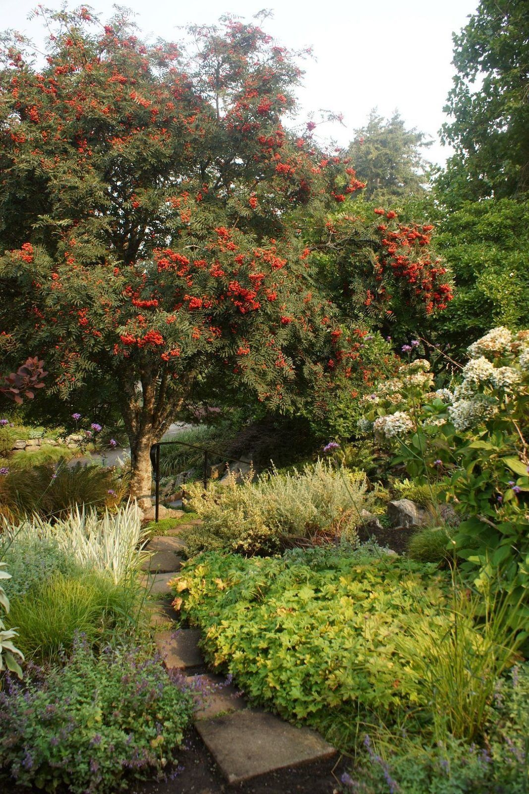 Garden inspiration from british columbia part 1 finegardening a scene from the cut flower garden highlighting a beautiful berry covered mountain ash sorbus sp zones 37 mountain ash are incredibly beautiful but izmirmasajfo