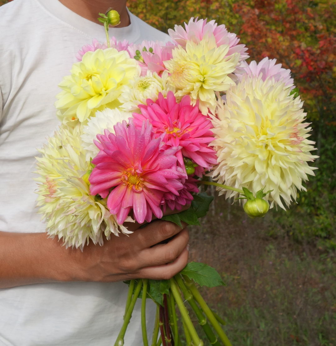 Favorite plants of fall finegardening dahlias bloom all summer long but they always seem to peak in the late summer and fall just before the first frost when theyve had time to grow massive izmirmasajfo