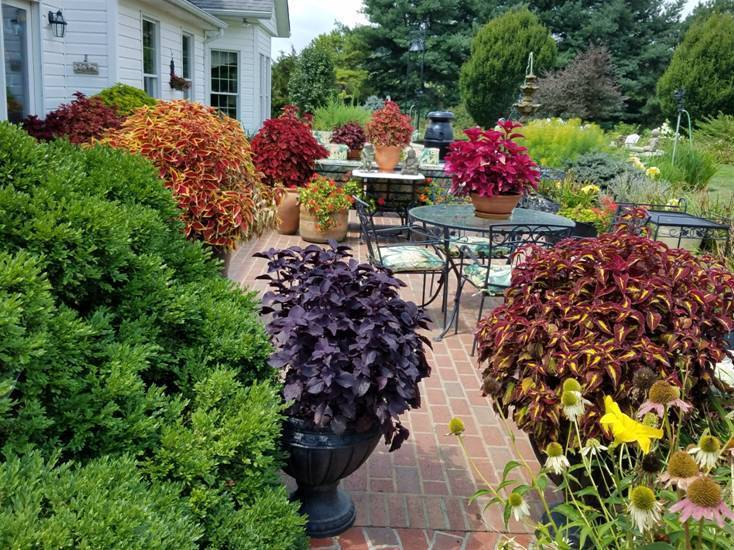 Get Season Long Color From Coleus Finegardening