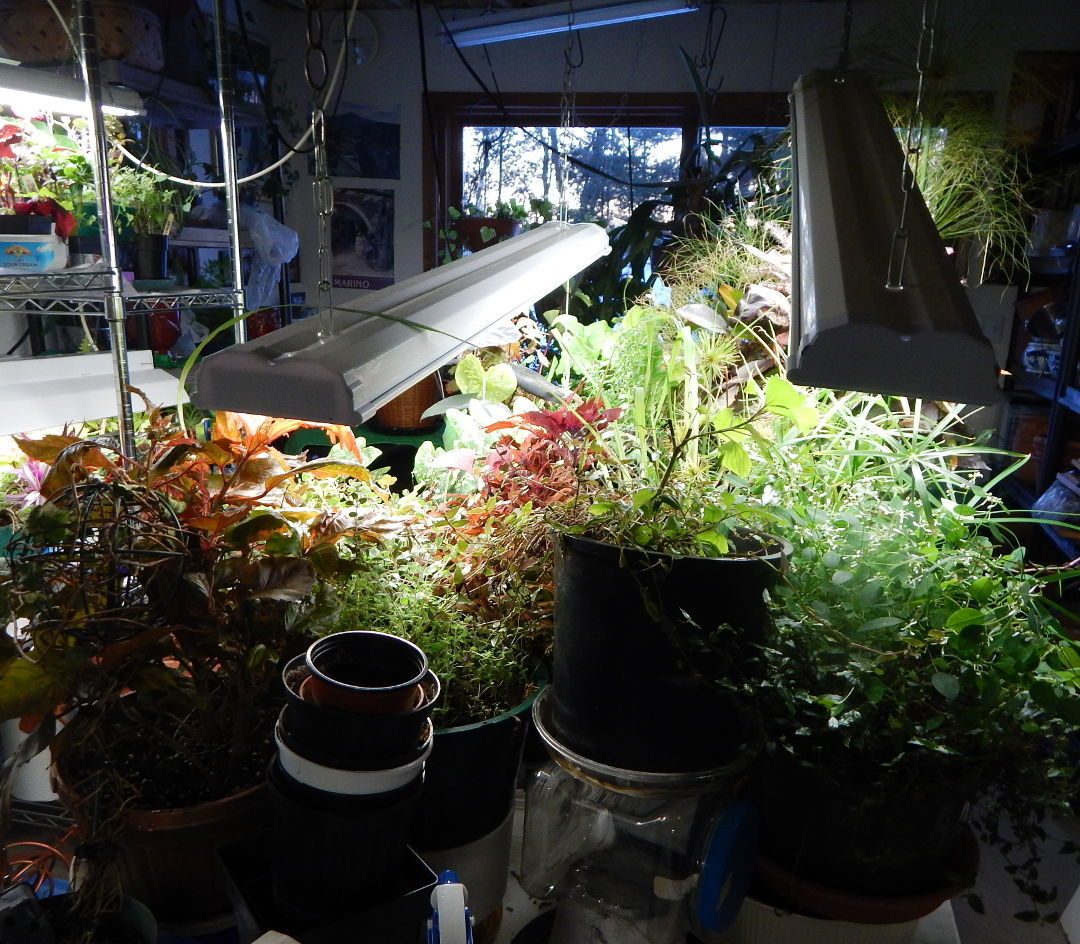 How to Turn a Basement Into a Greenhouse - FineGardening