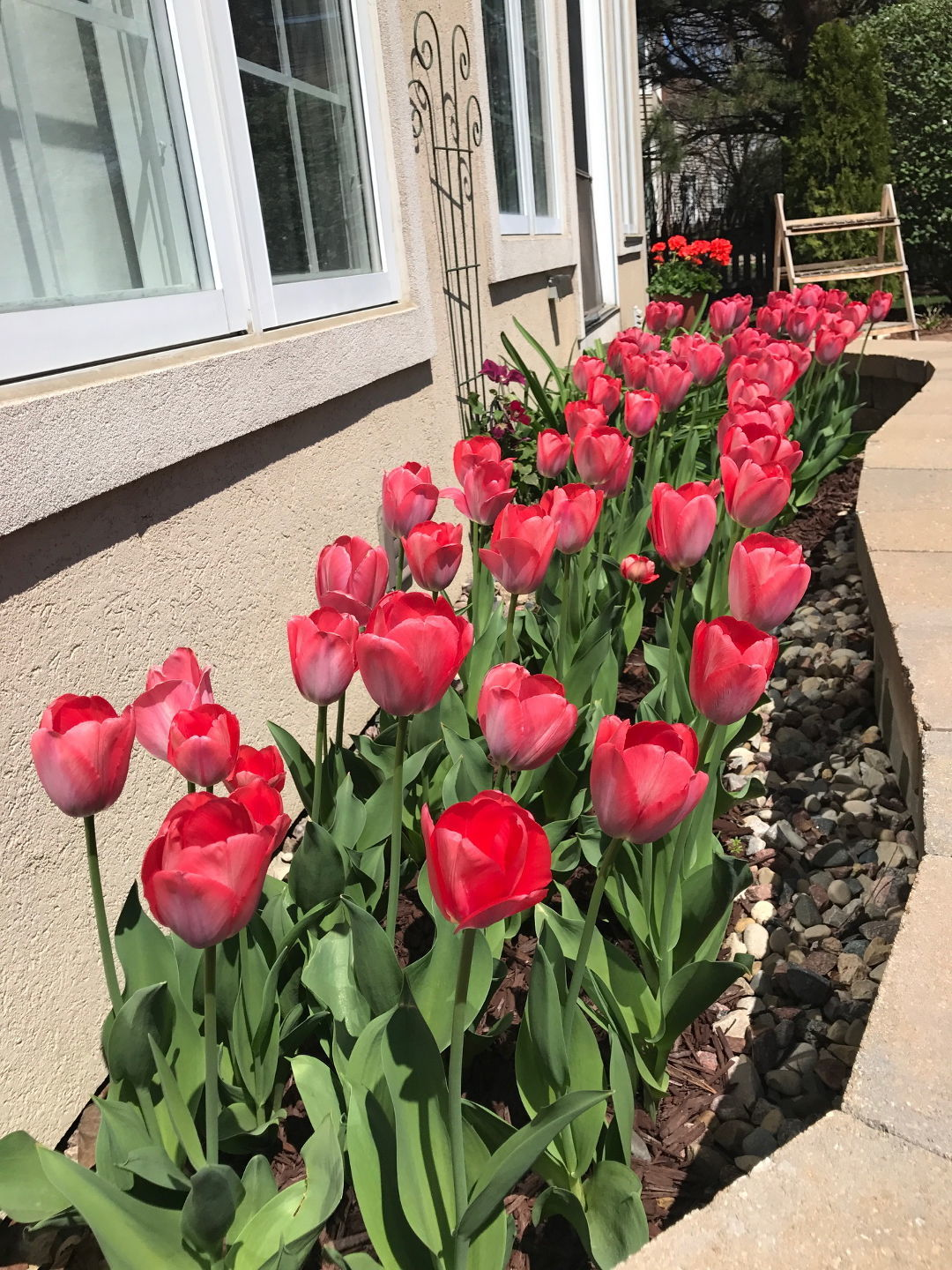 Plan Now For A Spring Display Finegardening