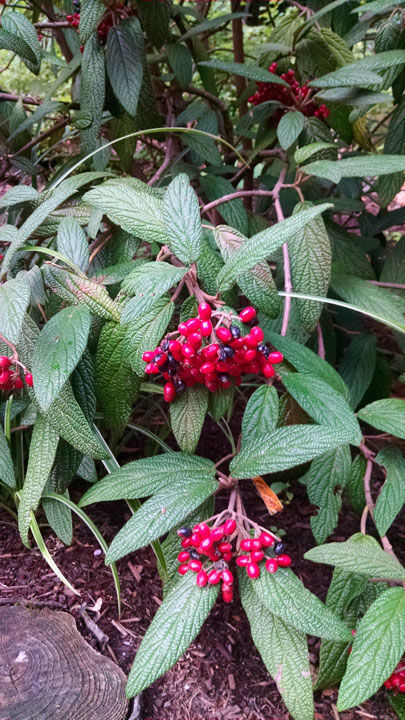 Episode 26: Broadleaf Evergreens - FineGardening on peppers red, animals red, ornamental grasses red, orchids red, berries red, cactus red, pots red, design red, nature red, mums red, flowers red,