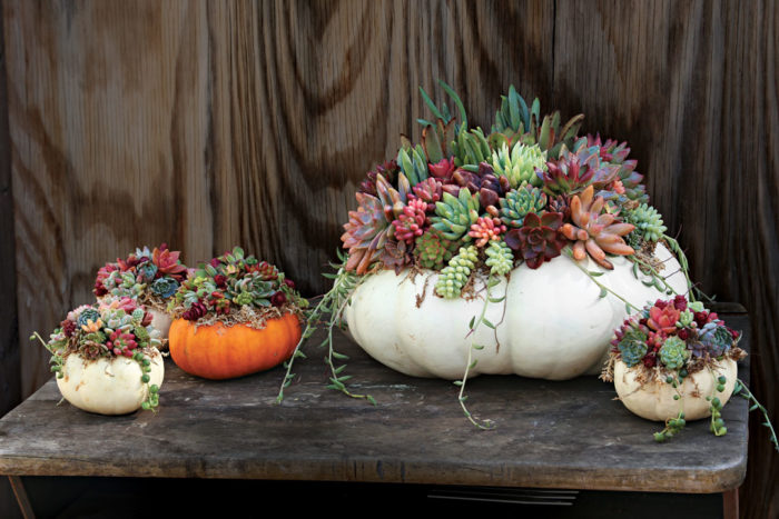 Create an Autumn Masterpiece