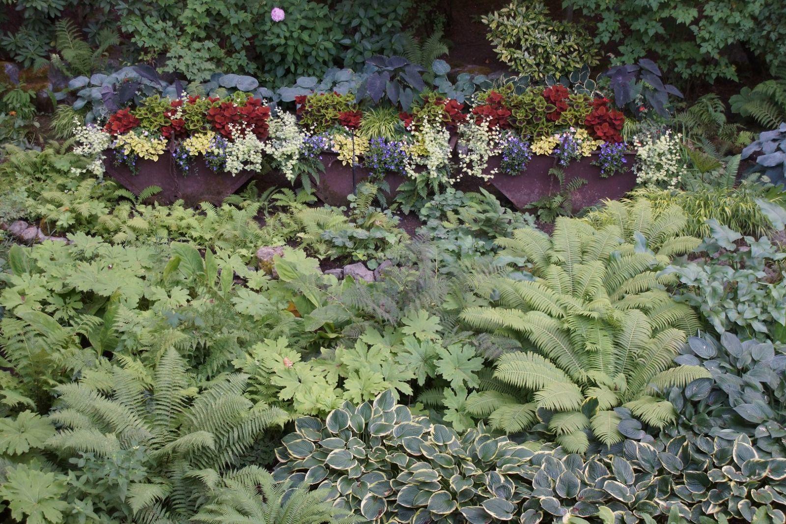 Inspiration For Shade Gardens Finegardening