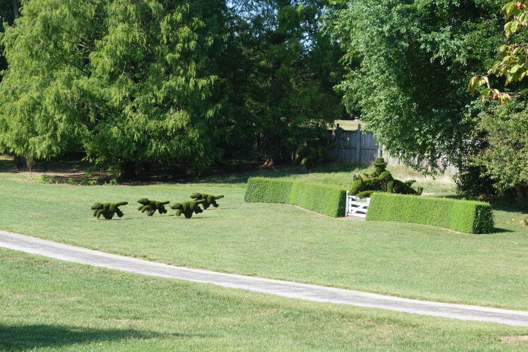 Creative Gardening With Topiary Finegardening