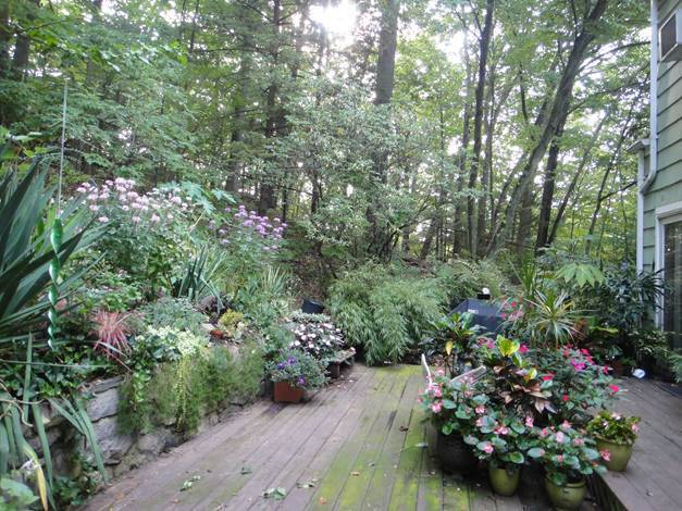 A Jungle In New England Finegardening