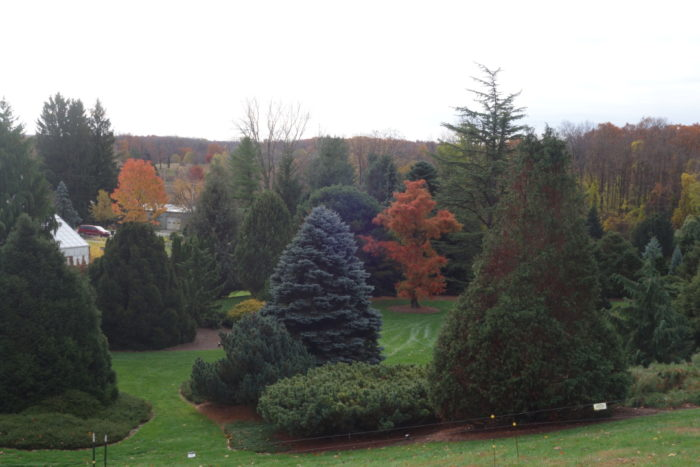 Plant Winter Interest With Conifers Finegardening
