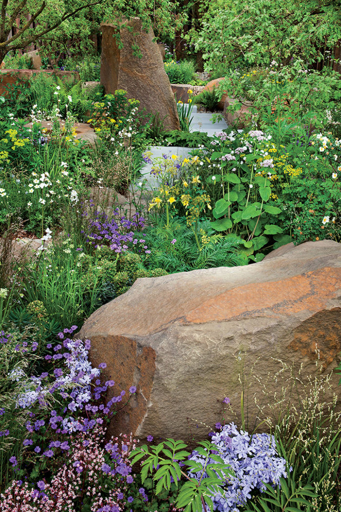 Preview: Dry Shade Stars - FineGardening on plant landscaping design, plant nursery design, plant terrarium design, plant flower garden design, plant by number garden plans, plant pots design, plant with long curly leaves, plant privacy screen design, plant trees design,
