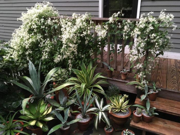 Episode 27: Plants Worth Overwintering