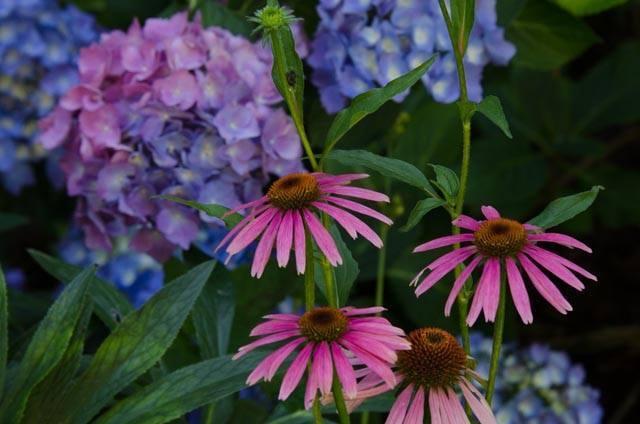 Be a Garden Matchmaker