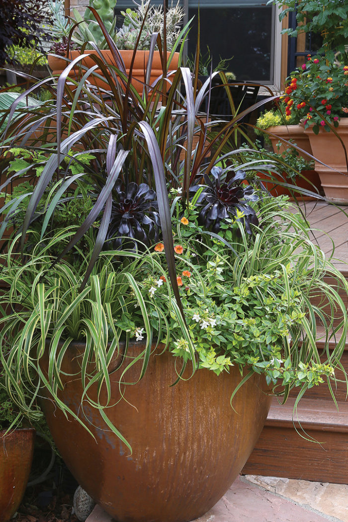 Expert Container Designs How To Combine Plants With Different