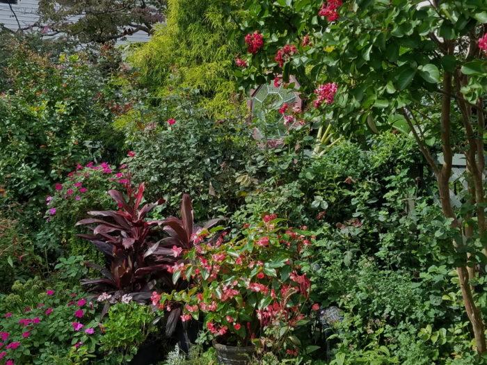 Favorite Plants In A New Jersey Garden Finegardening