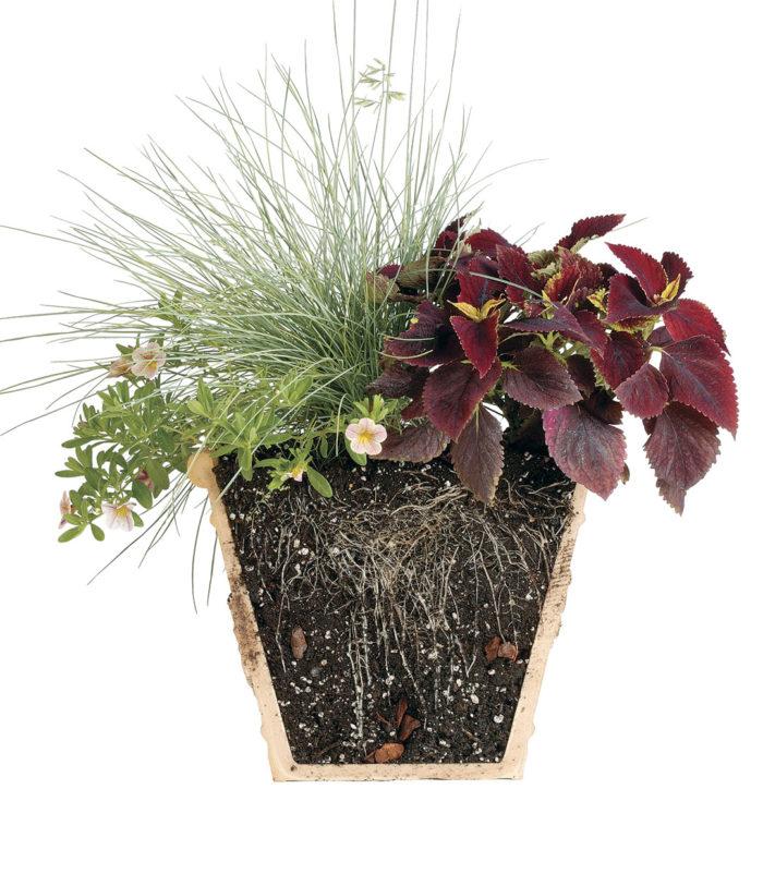 Understand Plant Survival Needs | Soil Basics