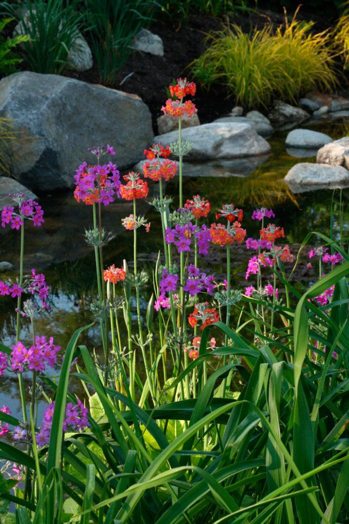 Episode 32 Fast Growing Perennials Finegardening