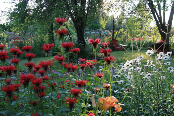 A garden evolves year after year