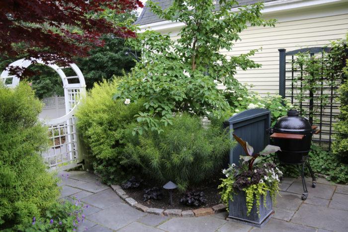 Courtyard Gardens Plant IDs