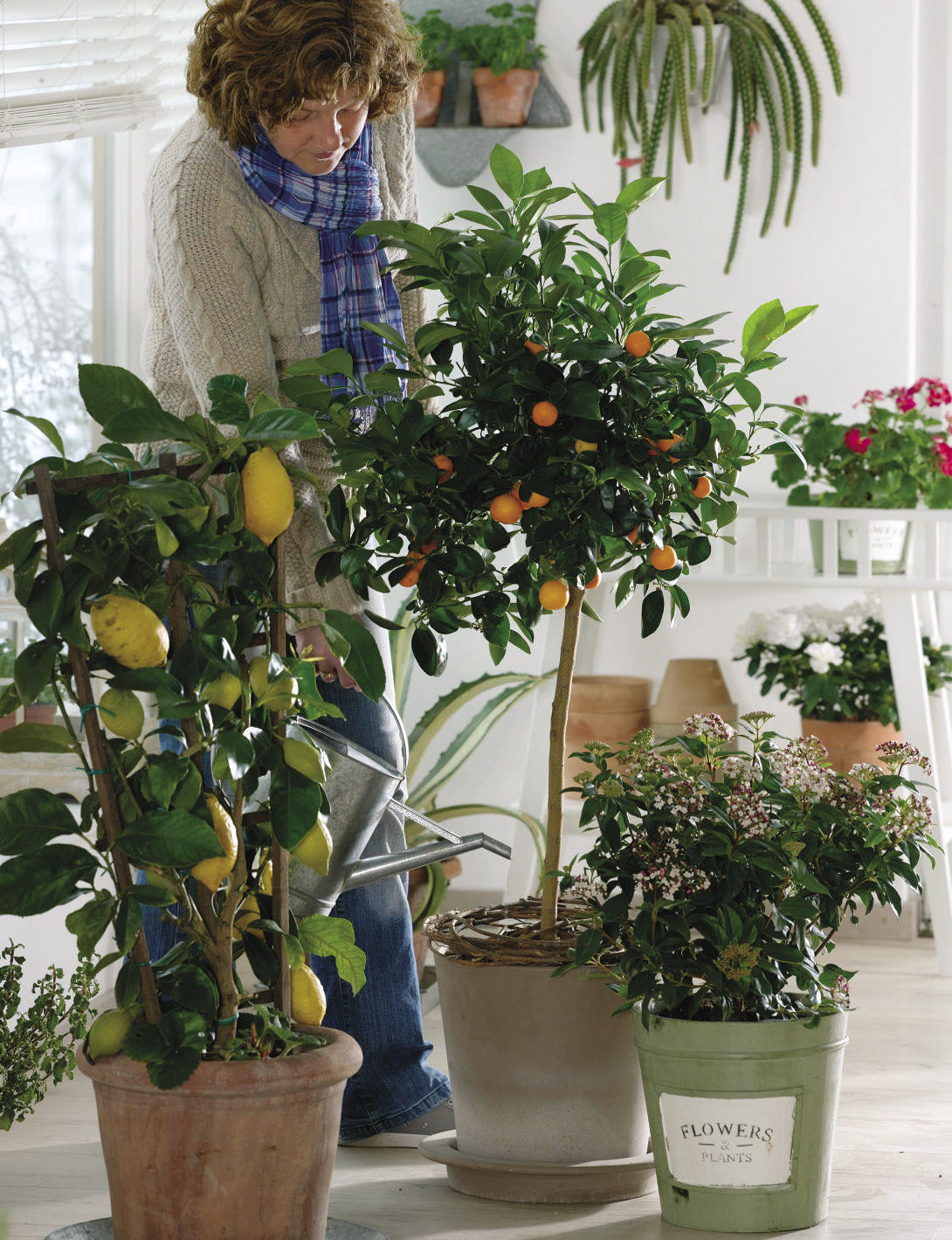 citrus plants indoors