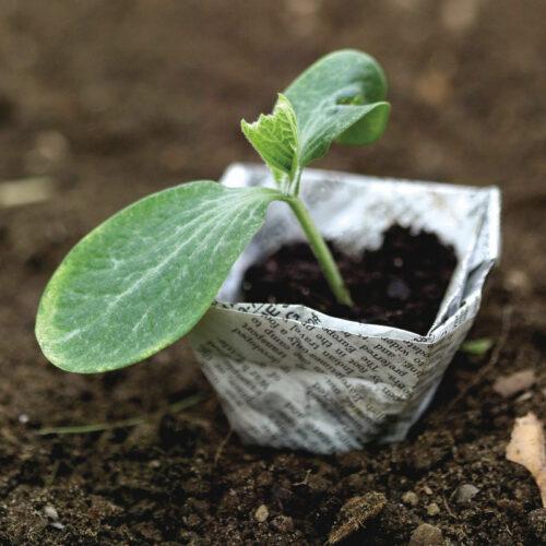 squash seed starting