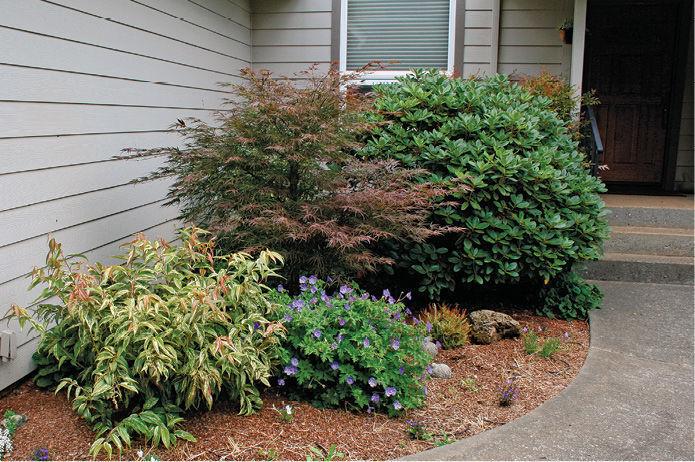 plants in front garden