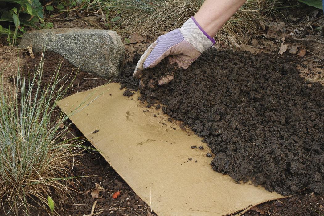soil to keep away garden thugs