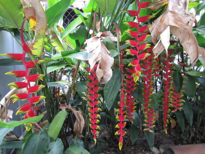 A 40 Year Labor Of Tropical Gardening Love Part 1 Finegardening