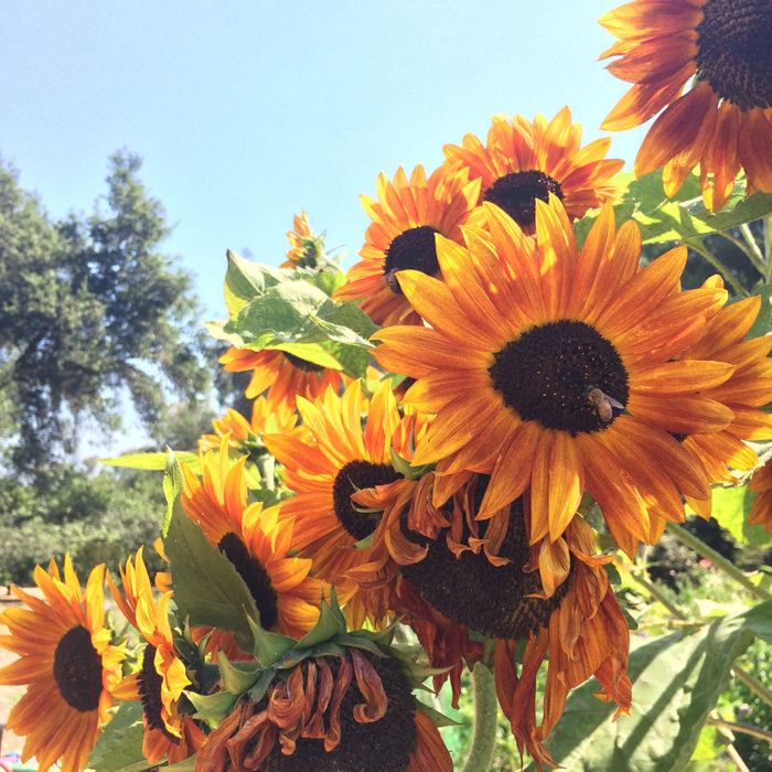 Southern California: April Garden To-Do List | Regional Report