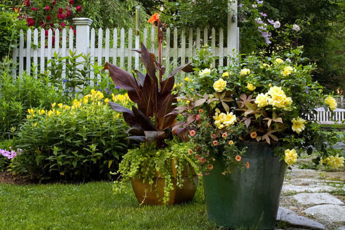 Plants For A Wow Worthy Container Finegardening