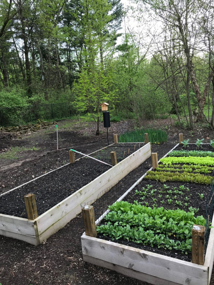 Raised beds are great for growing food crops