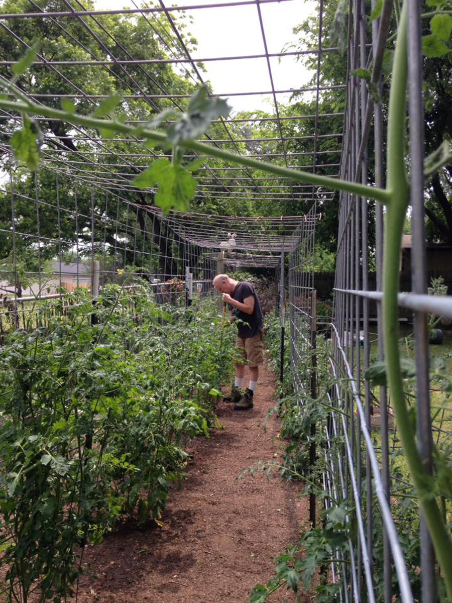 large tomato cages myself out of a roll of fencing