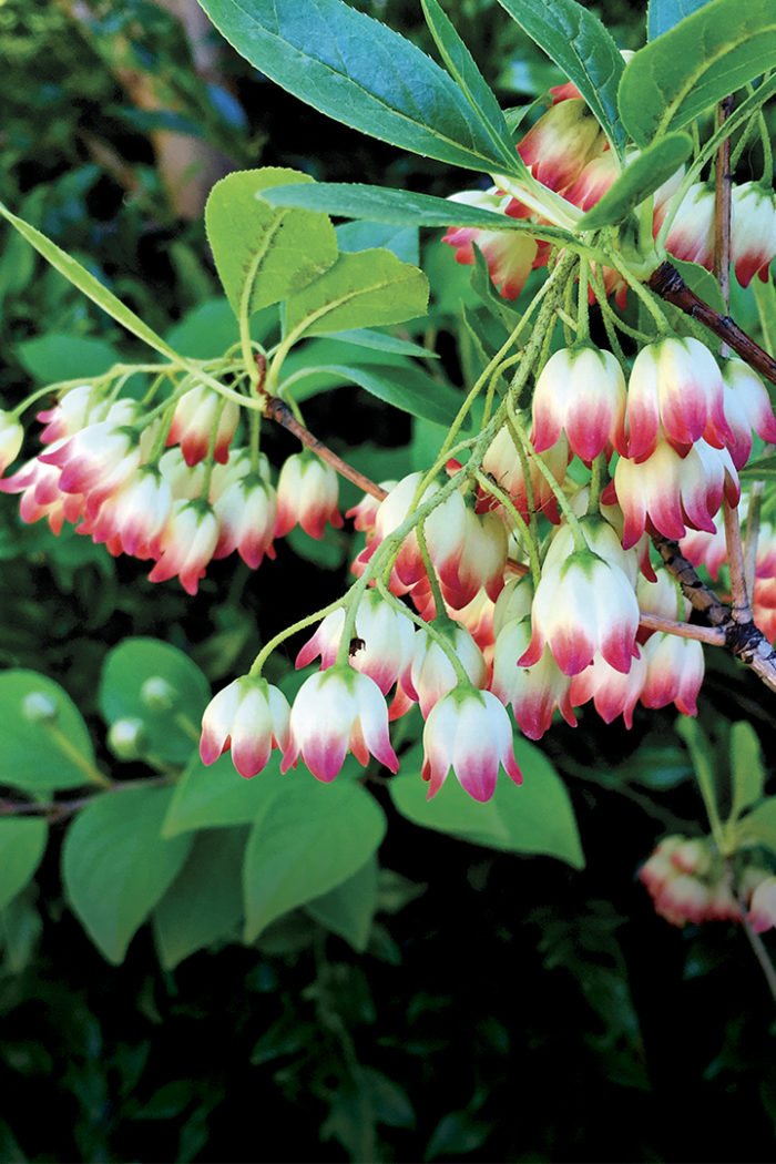 9 Great Shrubs for Shade