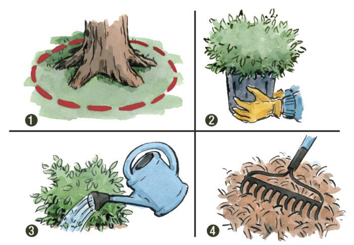 planting shrubs under trees