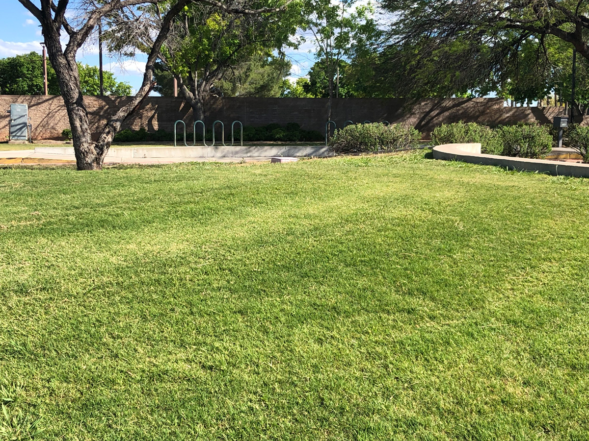 It is possible to have green grass in the Southwest! Plant some Bermuda grass around your property for that sink-your-feet-in satisfaction.