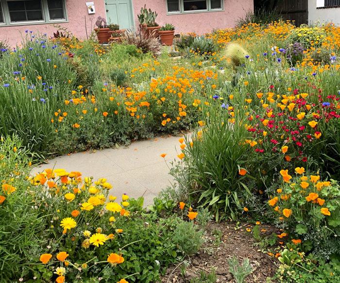 Southern California June Garden To Do List Regional Report