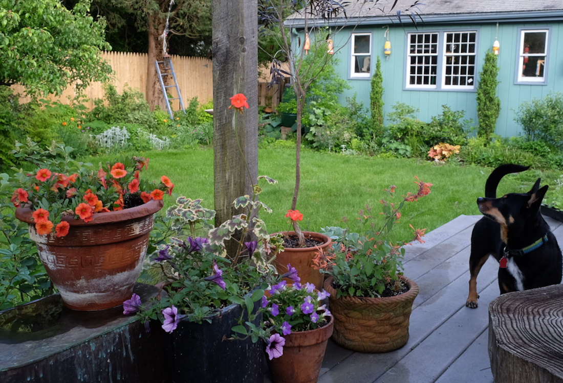 summer plant containers